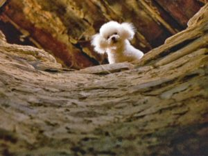 dog-from-silence-of-the-lambs