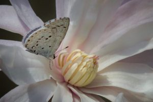 _butterflyflowerangie
